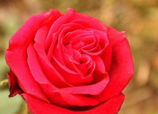 анализ стихотворения рильке окно роза
