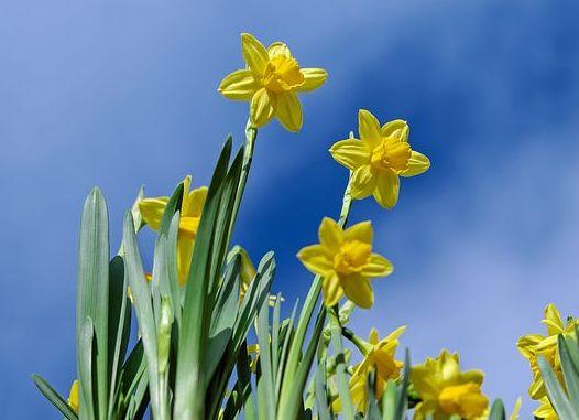 Стихотворение бунин полевые цветы