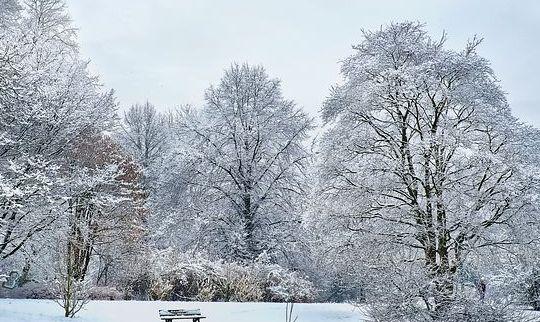 Анализ стихотворения Есенина Сыплет черемуха снегом