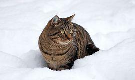 анализ стихотворения снежок некрасов